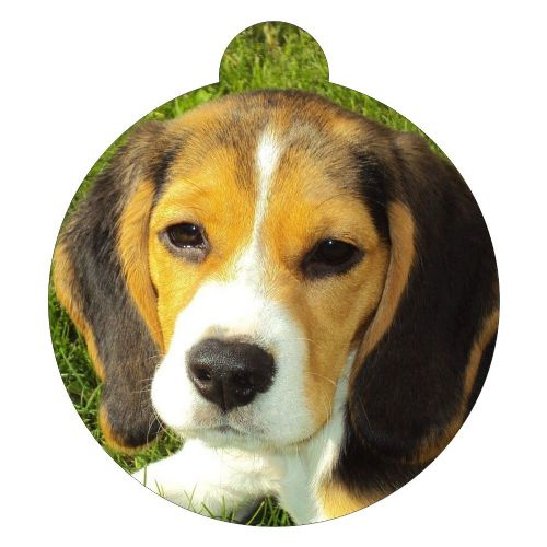 Beagle Picture ID tag